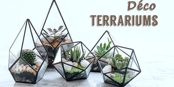 les terrariums de plantes le jardin en d co au c ur de la maison. Black Bedroom Furniture Sets. Home Design Ideas